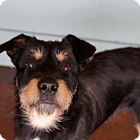 Adopt A Pet :: Colby - San Antonio, TX