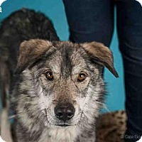 Adopt A Pet :: KYLA - Santa Fe, NM