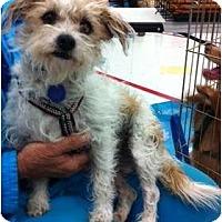Adopt A Pet :: Shasta - Studio City, CA