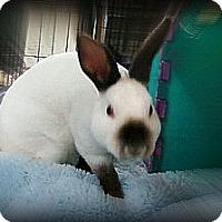 Adopt A Pet :: Bombdiggity - Williston, FL