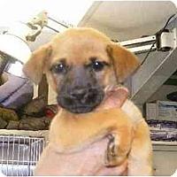 Adopt A Pet :: Bammy - Alexandria, VA