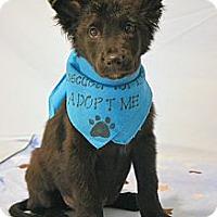 Adopt A Pet :: Blackie - Aurora, CO