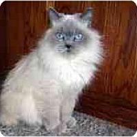 Adopt A Pet :: Coby - Arlington, VA