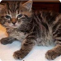Adopt A Pet :: Zsa-Zsa - Acme, PA