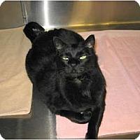 Adopt A Pet :: Thomas - Warminster, PA