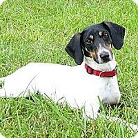 Adopt A Pet :: Triplette - Mocksville, NC
