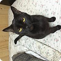 Adopt A Pet :: Storm & Sara - Clay, NY