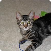 Adopt A Pet :: Rascal - Redondo Beach, CA