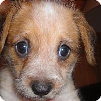 Adopt A Pet :: Beethoven - San Antonio, TX