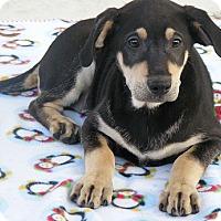 Adopt A Pet :: Rocky - Floresville, TX
