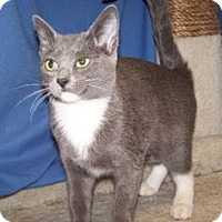 Adopt A Pet :: K-Fielding4-Roxie - Colorado Springs, CO