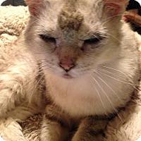 Adopt A Pet :: Blanca - Baltimore, MD