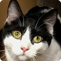 Adopt A Pet :: Tara - Winchester, CA