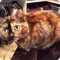 Adopt A Pet :: Scuda - Alexandria, VA