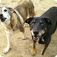 Adopt A Pet :: BENNY - Valley Village, CA