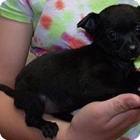 Adopt A Pet :: PEPPER - Corona, CA