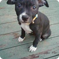 Adopt A Pet :: Jackie O - Buffalo, NY