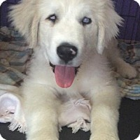 Adopt A Pet :: Finn - Batesville, AR