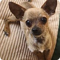 Adopt A Pet :: Claude - 3.5 lbs! - Los Angeles, CA