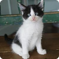 Adopt A Pet :: Tippy - San Antonio, TX