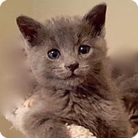 Adopt A Pet :: Ashe - Long Beach, NY