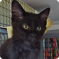 Adopt A Pet :: Jill - Grants Pass, OR