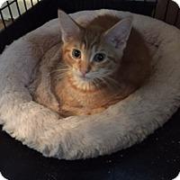 Adopt A Pet :: Otis - Warren, MI