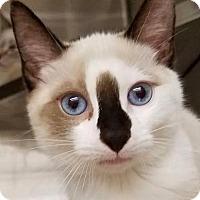 Adopt A Pet :: Frank - New York, NY
