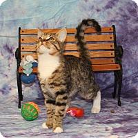Adopt A Pet :: Thumbelina - Stockton, CA