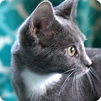 Adopt A Pet :: Gail - Staunton, VA