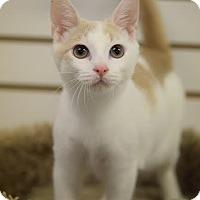 Adopt A Pet :: Tartar - DFW Metroplex, TX
