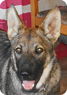 German Shepherd Dog Dog for adoption in Yucaipa, California - Sabrina