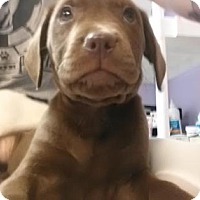 Adopt A Pet :: Jethro - Austin, TX