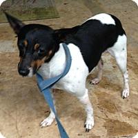 Adopt A Pet :: Rita - Louisville, KY