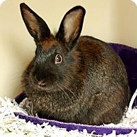 Adopt A Pet :: Penelope - Harrisonburg, VA