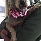 Adopt A Pet :: Figgy