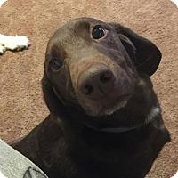 Adopt A Pet :: Zane - Lewistown, PA