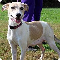 Adopt A Pet :: Carley - Waldorf, MD