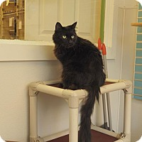 Adopt A Pet :: Furness - Philadelphia, PA