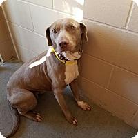 Adopt A Pet :: Sassy - Appleton, WI