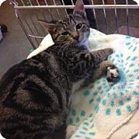 Adopt A Pet :: Fonzi - Maple Ridge, BC