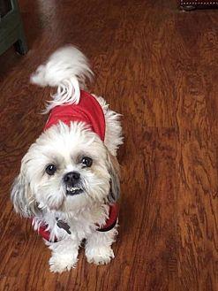 Shih Tzu Dog for adoption in Winder, Georgia - Cappochino
