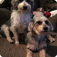 Adopt A Pet :: Mickey & Minnie - North Richland Hills, TX