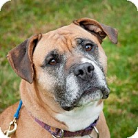 Adopt A Pet :: JOSIE - Prospect, CT