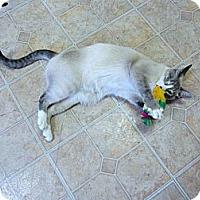 Adopt A Pet :: Thomas - Mobile, AL