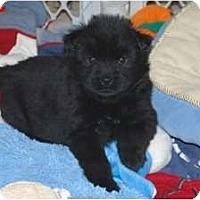 Adopt A Pet :: Kyra - Minneola, FL