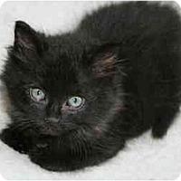 Adopt A Pet :: Joplin - Arlington, VA