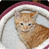 Adopt A Pet :: Frankie - Racine, WI