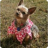 Adopt A Pet :: Cassie - Gulfport, FL