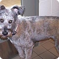 Adopt A Pet :: Izzy - Jackson, MI